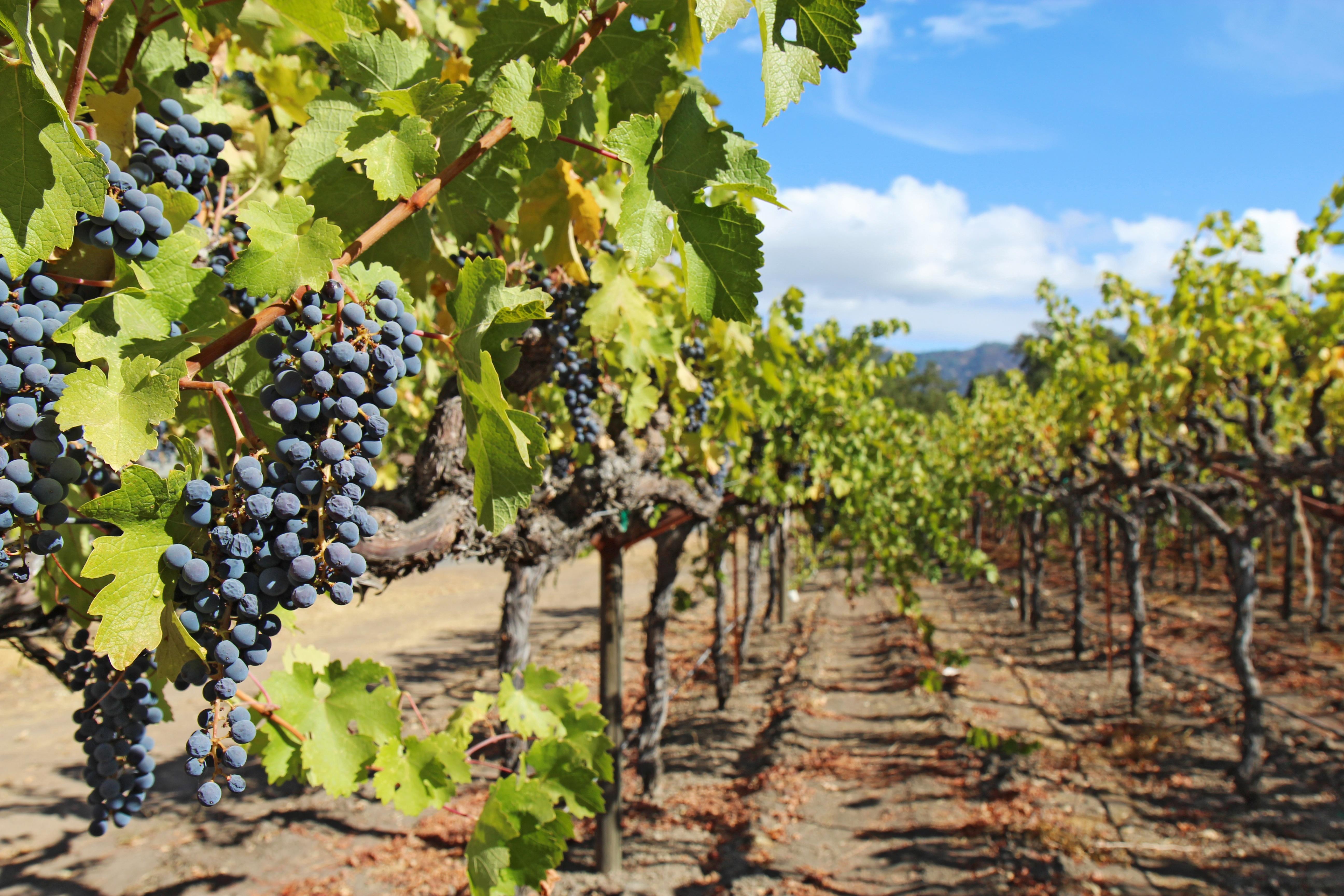 Regional Wine Spotlight: California Wines